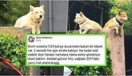 Yıllardır Aynı Duvar Üstünde Yoldan Geçenleri İzleyen İstanbul Kuzguncuk'un Maskot Köpeği Rocky'nin Hikayesi