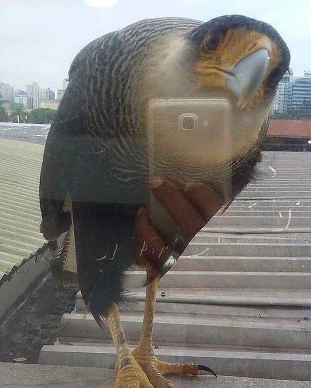 9. Kuş kendine selfie yapmak istemiş.
