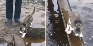Patilerini Islatmamak İçin Zorlu Yolcuğunu Komando Gibi Tamamlayan Kedi