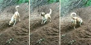 Kendi Başına Çelik Çomak Oynayarak Müthiş Eğlenen Köpek