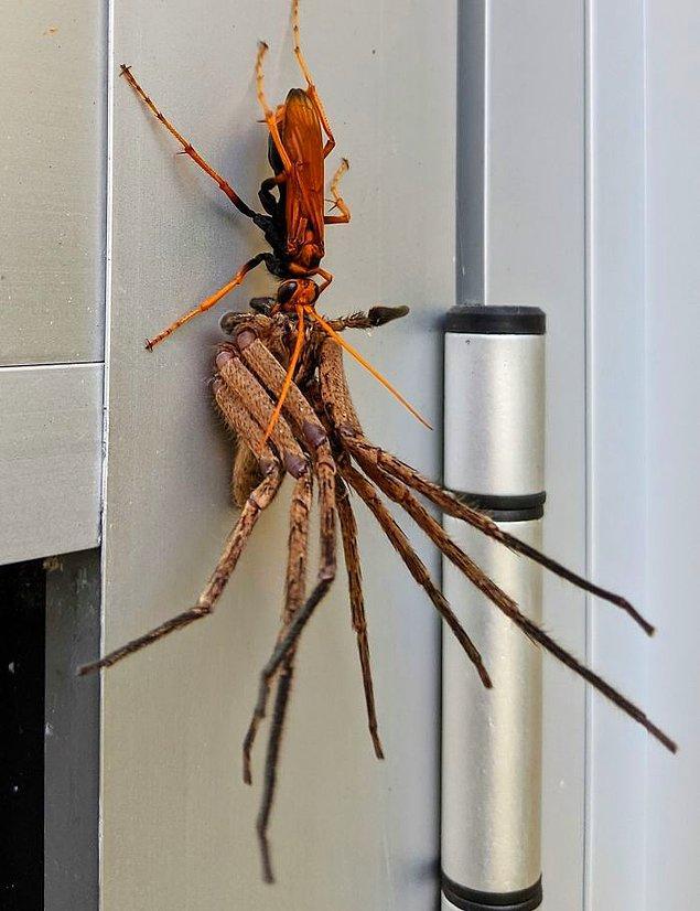 """19. """"Eve geldim ve bu tarantulayı gördüm."""""""