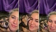 İnsan Dostunun Sevgi Gösterisi Karşısında Kendinden Geçen Köpek