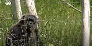 Dünyanın En Büyük Suç Organizasyonu: Vahşi Hayvan Ticareti