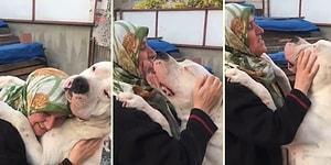 Köpek Dostuna Gösterdiği Sevgi Gösterisi ile İzlerken Gözlerinizden Kalpler Fışkırtacak Teyze