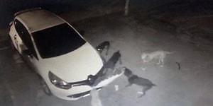 Kediyi Yakalamak İçin Arabanın Tamponunu Parçalayan Köpekler