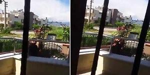 Sokak Hayvanlarını Besleyen Kadın, Komşusu Tarafından Tehdit Edildi: 'Sana Mermi Atarım'
