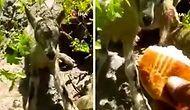 Annelerini Bekleyen Yavru Dağ Keçilerine Poğaça Veren Yurdum İnsanı