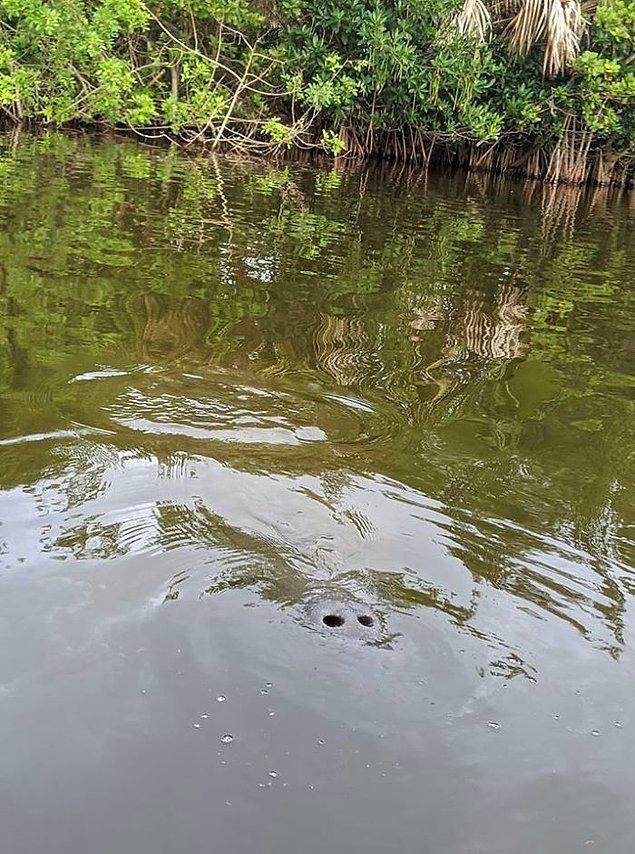 3. Yüzerken fark etmek çok korkunç olurdu heralde!