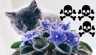 Evcil Hayvan Sahiplerinin Dikkatine! Minnoş Dostlarınızı Farkında Olmadan Zehirleyebilecek 15 Yaygın Ev Bitkisi