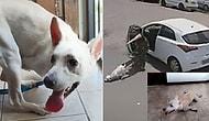 Engelli Köpeğini Sokağa Terk Eden Vicdansız Kadın