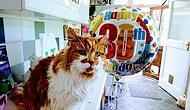 Dünyanın En Yaşlı Kedisi Rubble 31 Yaşında Hayatını Kaybetti