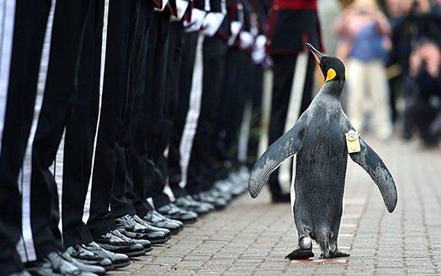 1. 2008 yılında Norveç'te bir penguene şövalyelik unvanı verilmişti.