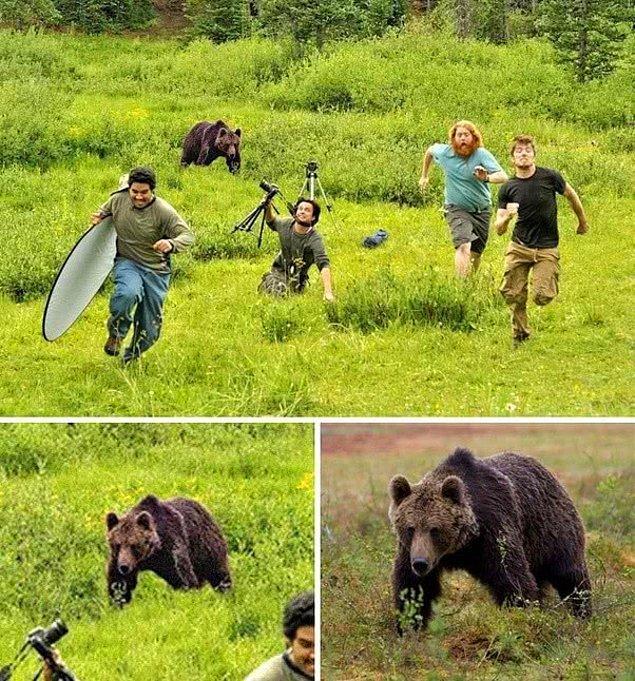 7. National Geographic fotoğrafçılarına ait  odluğu söylenilen bu fotoğraftaki ayı, başka bir görüntüden alınmış.