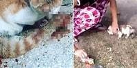 Sosyal Medyada Kedilere Yönelik Şiddet İçeren Video ve Fotoğrafları Paylaşınca Halk Tepki Gösterdi: '#SudeAndaşTutuklansın'