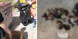 Küçükçekmece'de Vahşet: Çöp Konteynerinde 16 Kedi Ölüsü Bulundu