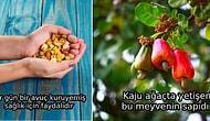 Yediklerimiz Hakkında  Bilgi Sahibi Oluyoruz: Kuruyemiş ve Kuru Meyveler ile İlgili 10 Mit