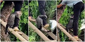 Ağaçta Mahsur Kalıp Korktuğu İçin Kendisini Kurtaran Adamın Bacağına Sarılan Kedi