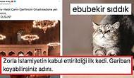 16 Yıldır Ayasofya'da Yaşayan Şaşı Kedi Gli İçin Yeni İsim Arayışına Giren Mehmet Ardıç'a Gelen 13 Öneri