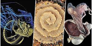 Bilim Meraklılarını Hayretler İçinde Bırakacak Muhtemelen Daha Önce Hiç Görmediğiniz 16 Görsel