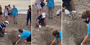 Antalya'da Zarar Gören Caretta Caretta Yuvasındaki Yumurtaları Kurtarmaya Çalışan Güzel İnsanlar