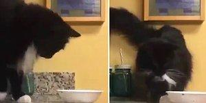 Tezgahın Üzerindeki Kaseyi Yere Düşürmek İçin İnce İşçilik Sergileyen Psikopat Kedi