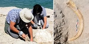 Kayseri'de 8 Milyon Yıllık Kaplumbağa ve Fil Dişi Fosilleri Bulundu