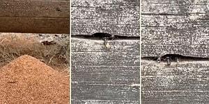 Bir Ağacın İçini Oyarak Kendilerine Yuva Yapan Karıncaların Büyüleyici Görüntüleri