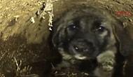 Atık Su Borusuna Sıkışan Yavru Köpeği Kurtaran Güzel İnsanlar