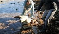 Nesli Tehlike Altındaki Caretta Carettayı Pompalı Tüfekle Öldürdüler