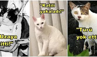 Sebep Olduğu Güzellikleri Duyunca Hayran Kalacağınız Dünya Tarihine Patileyerek Yön Vermiş İnanılmaz Kediler