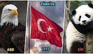 Hepsi Temsil Ettiği Milletin Bir Özelliğini Taşıyor! Ülkelerin Ulusal Sembolü Olan Hayvanları Biliyor Muydunuz?