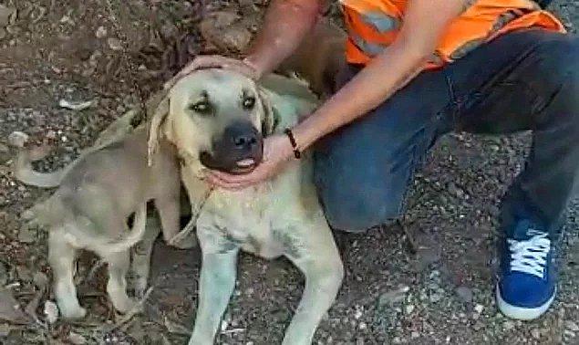 2. 71 yaşındaki adamın köpeğe tecavüz etmesinin ardından para cezasıyla serbest bırakılması...