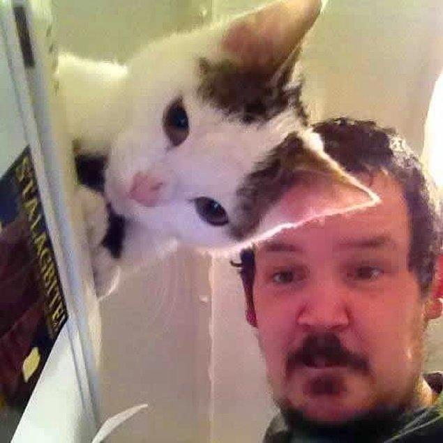 10. Kedi gibi kedi. :)