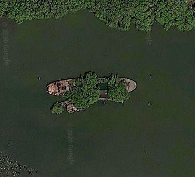 11. Avustralya'da bir gemi enkazında büyüyen ağaçlar.