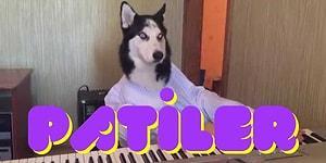 Klibinde Evcil Hayvanlar Görünce Gözlerimizden Kalpler Fışkırtan 12 Şarkı