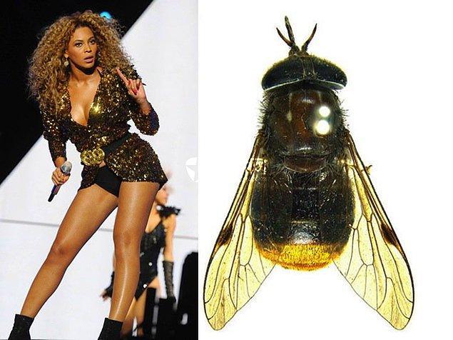 4. Keşfedilen bir sinek türüne onun adı verildi...