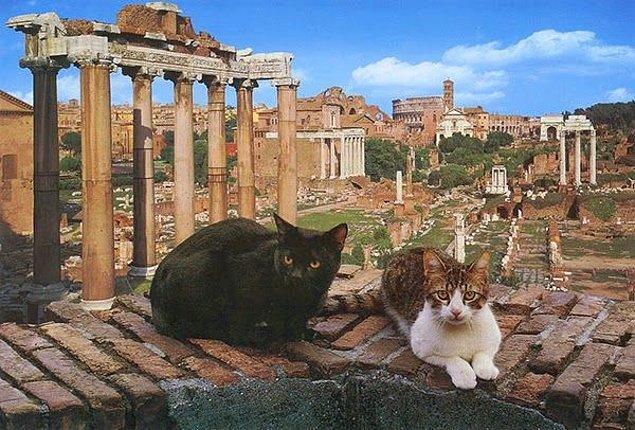 9. Roma'da Sezar'ın öldürüldüğü antik tapınak günümüzde kedilerin evi haline gelmiştir.