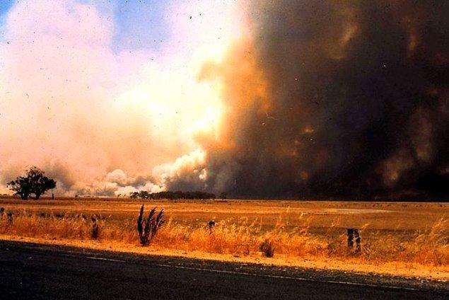 """15. Avustralya'da 16 Şubat 1983 Çarşamba günü, yüzden fazla farklı noktada başlayan ve kontrol altına alınamayan yangın sonrasında """"Kül Çarşamba"""" olarak anıldı."""
