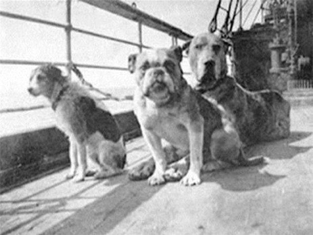 3. Titanik'te olan 12 köpekten hayatta kalan üçü.