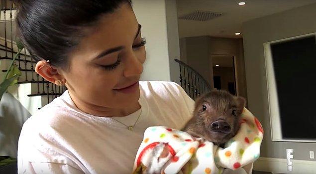 7. Kylie'nin domuz yavrusunu tavuk sanması...