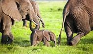 Gezegenimiz Alarm Veriyor: Yaban Hayvanlarının Nüfusu 50 Yılda Yüzde 68 Azaldı