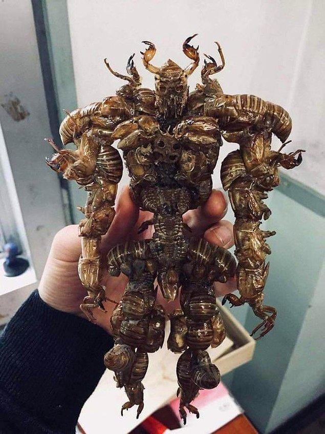 """7. """"Tamamı ağustos böceği kabuğundan yapılan bir yaratık."""""""