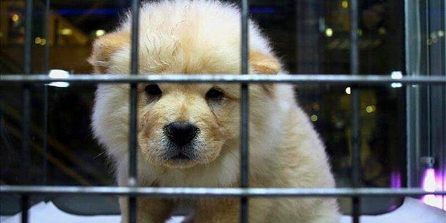 6. Bir malmış gibi hediye olarak pet shoptan hayvan satın alınıyor...