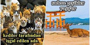 Kediler Tarafından İşgal Edileni Bile Var! Okurken Sizi Şaşkına Çevirecek Hayvanlarla Dolu Birbirinden İlginç Japon Adaları