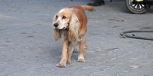 Çanakkale'de 16 Köpeği Öldürüp Serbest Kalan Canilere 30 Bin TL Para Cezası