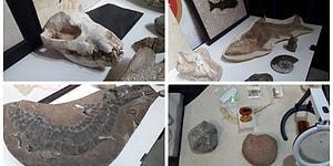 Çeşitli Hayvanlara Ait Kafatasları da Var: Adnan Oktar'ın Evlerinden 10 Milyon Dolarlık Fosil Çıktı