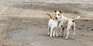 İyi Kalpli Ol! Hayvan Haklarıyla İlgili Çıkması Planlanan Yasa Öncesi Hepimizin Bilmesi Gereken 8 Şey