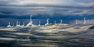 2020 Yılı Avrupa Vahşi Yaşam Fotoğraf Yarışmasını Kazanan Birbirinden Büyüleyici ve Çarpıcı 30 Fotoğraf