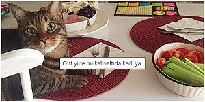 Gören Herkesin Evini Kedilerle Doldurmak İstemesine Sebep Olacak 19 Paylaşım