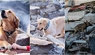 Hayvan Dostlarımıza Çok Şey Borçluyuz: Arama Kurtarma Köpekleri ve Sürece Nasıl Katkı Sağladıkları Hakkında 10 Bilgi